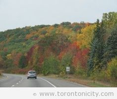 Fall Colours in Bloomfield, Prince Edward County Hwy 401 near Brighton, Ontario – Torontonicity.com > things to do in Toronto, Canada