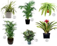(Cat safe) house plants for cleaner air - spider plant, Areca Palm, Boston fern, bamboo palm, rubber plant, bromeliads