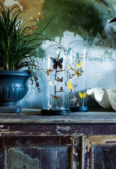 voguelivingmagazine: Vibrantly coloured butterfly specimens look set to fly away from this heritage-listed Sydney terrace. From 'Walls that Talk', a story on page 212 of Vogue Living July/Aug Photograph by Jason Busch. Vogue Living, Shabby Chic, Turbulence Deco, Deco Boheme, The Bell Jar, Bell Jars, Branch Decor, Home And Deco, Glass Domes