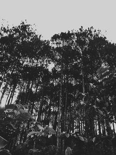 #forest #night #wallpaper