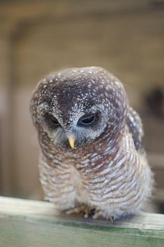 Baby Owl is sad! worldwildlife.org #WWF