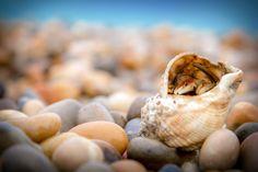 (DEPTH OF FIELD) Hermit Crab