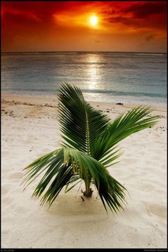 amazing dreams - sunset beach ocean palm