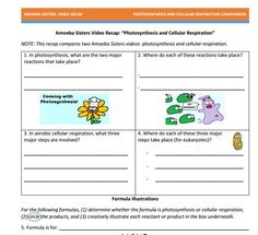 DNA vs. RNA + Protein synthesis handout made by the Amoeba ...