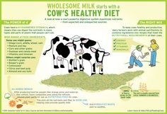 Wholesome milk starts with a cow's diet. Check out what your dairy cow is eating! #WhereGoodComesFrom