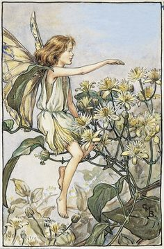 Illustration for the Traveller's Joy Fairy from Flower Fairies of the Summer. A girl fairy sits facing left on a branch of traveller's joy pointing with her right hand.     Author / Illustrator  Cicely Mary Barker