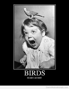 I think Hitchcock movies ruined my mom on scary movies. She's afraid of shower curtains and birds lol @Kerri Wetherington