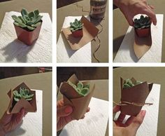DIY succulent favor – mini succulent party favor Image source Succulents as wedding favors, gold painted pots, let love grow // Clay Austin Photography Image source DIY potted succulent wedding favors Image source Succulent Party Favors, Succulent Centerpieces, Succulent Gifts, Succulent Plants, Planting Plants, Growing Succulents, Potted Plants, Diy Wedding Favors, Wedding Gifts