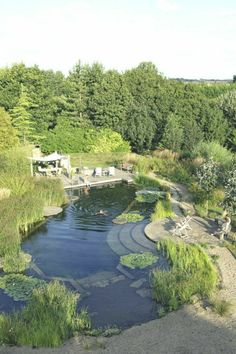 6 Small Natural Swimming Pool Ideas - Many people enjoy swimming at a natural swimming pool. Get inspired by these small natural swimming pool ideas from us! Natural Swimming Ponds, Natural Pond, Swimming Pools Backyard, Ponds Backyard, Swimming Pool Designs, Terraced Landscaping, Backyard Landscaping, Pond Design, Landscape Design