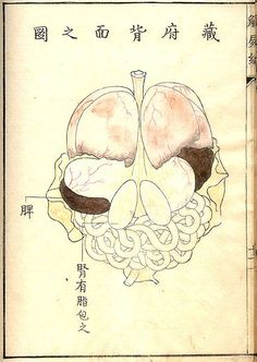 Anatomy Drawing Medical Kaishi Hen, an Century Japanese anatomical atlas Male Figure Drawing, Figure Drawing Reference, Anatomy Reference, Medical Drawings, Medical Illustrations, Islamic Paintings, Science Art, Science Models, Anatomy Drawing