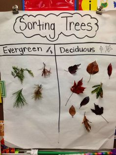 Evergreen and Deciduous Anchor Chart
