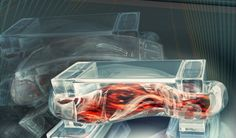 Diseñan los primeros biorobots propulsados pormúsculo
