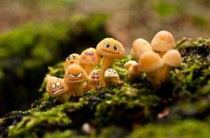 We are Family by Nouran Abu Summaqa on 500px