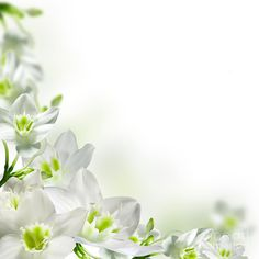 floral borders and frames free download - Google Search