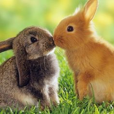 BUNNIES KISSING!!!!!!!!!!!!!!!!!!!!!!!!!!!!!!!!:):):):):):):):):):):):):):):0:0:0:0:0;0:);):0:0