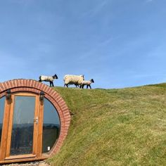 Hobbit House Ltd | Glamping Pods For Sale | Man cave | 125 Year Guarantee