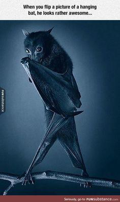 That is one sassy bat