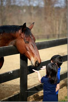 Jill Samter - Horse Therapy Healing Our Hurting Children  http://www.jillsamter.com/2013/04/horse-therapy.html