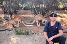 Por falar em Cangurus olha eles aí!  Hoje conhecemos o parque Alice Springs Desert Park. No meio do deserto o parque abriga diferentes ecossistemas australianos como: Desert Rivers Sand Country e Woodland.  Ao longo de uma caminhada fácil de 3 km passamos por áreas destinadas a animais da região como cangurus dingo aves roedores e répteis.  Antes de iniciar o passeio a dica é assistir ao filme curto que passa no cinema do parque.  Lá você aprenderá um pouco sobre a história dos desertos…