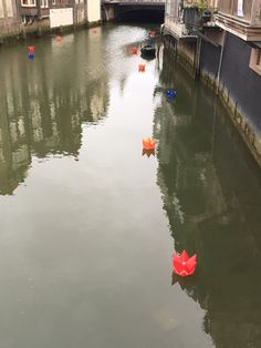 Little crowns in the water