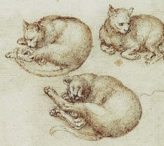 Articles et Races sur les Chats - (page Animal Posters, Drawing Practice, Classical Art, Realistic Drawings, Art Graphique, Western Art, Ancient Art, Animal Drawings, Doodle Art