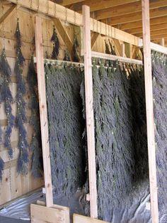 Lavender Farm - drying racks....