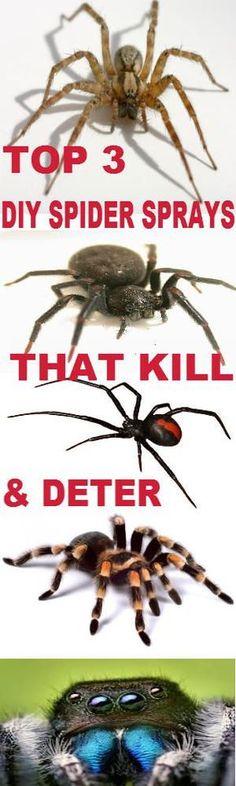 THE GREEN PREPPER: TOP 3 DIY HOMEMADE DAILY OR DISASTER SPIDER SPRAYS - KILL & DETER SPIDERS FROM INVADING - THEGREENPREPPER