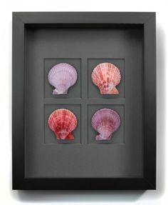 PHEROMONE: Noble Scallops – Berry 11x14 #art #home #decor