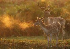 Run, beautiful deer, run!  That heartless season is coming....