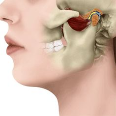 Normal Functioning Jaw