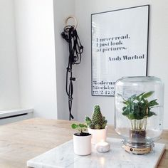 @pikaplant Jars are plants you never need to water!  Discover more on #ArchiproductsShop!  #archiproducts