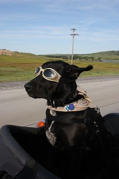 19 Dogs in Sidecars. http://pup-protector.myshopify.com/