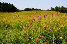 Lato na Mazurach Poland, Vineyard, Landscape, Outdoor, Outdoors, Landscape Paintings, Vineyard Vines, Ignition Coil, The Great Outdoors