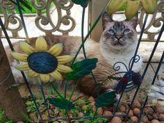 Flor gato
