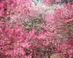 Prachtig schouwspel. Mooie achergrond. Helaas in in eigen tuin :(