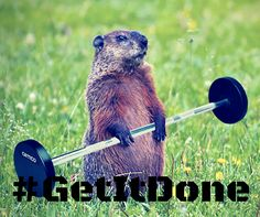 Happy Ground Hog Day!    Turn Your Passion into Your Profession with FiTOUR® #GetItDone