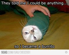 We can all be anything we dream.... except a burrito or any other food item. That's a touch strange