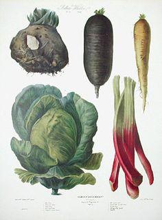 Vilmorin Fruit & Vegetable Prints - for kitchen/dining roo