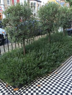 Olive tree landscape front yards courtyards 21 ideas - All For Garden Terraced Landscaping, Landscaping Trees, Front Yard Landscaping, Privacy Landscaping, Fruit Tree Garden, Garden Trees, Victorian Front Garden, Landscape Design, Garden Design