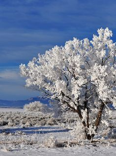 Beautiful Winter Landscape in Casper, Wyoming