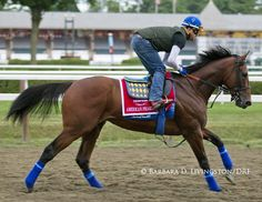 American Pharoah takes his first gallop over Saratoga Racetrack Travers Stakes, Triple Crown Winners, American Pharoah, Sport Of Kings, Horse Racing, Race Horses, Thoroughbred Horse, Everything Funny, Livingston