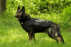 K9 Chase. -- I love to see the Kevlar vest, hope someday to see it on all K9's who are serving on the frontlines!