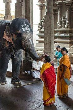 Elephant in the Madurai Shree Menakshi temple. Elefánt a Madurai Sree Meenakshi templomban. Ancient Greek Architecture, Gothic Architecture, India Images, Amazing India, India Culture, Om Namah Shivaya, Save The Elephants, India People, India Colors