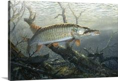 Terry Doughty Premium Thick-Wrap Canvas Wall Art Print entitled Cruising the Shallows Muskie, None