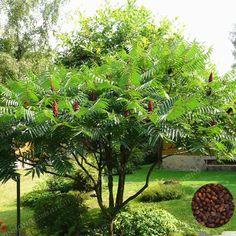 Backyard Landscaping Designs- Convert Your Backyard into Something Useful! Wild Plum Tree, Small Backyard Landscaping, Privacy Landscaping, Backyard Plants, Backyard Patio, Landscaping Ideas, Garden Plants, White Oak Tree, Full Sun Plants