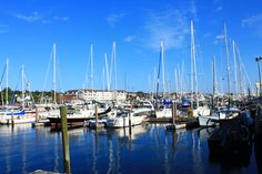 The harbour is full of yachts varying in size #travel