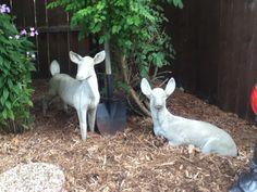 My Mom's Deers
