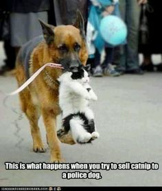 time for the cat to go to jail