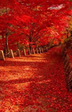 Autumn is a second spring when every leave is a flower! Autumn flowers in Nara, Japan Beautiful World, Beautiful Places, Beautiful Pictures, Autumn Scenery, All Nature, Fall Pictures, Funny Pictures, Belle Photo, Beautiful Landscapes