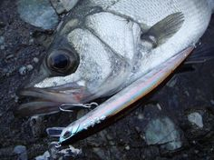 DUO – Nippon Quality Lures
